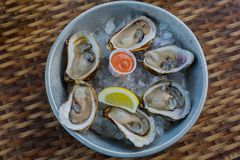 Raw Oysters on ice. Raw Malpaque oysters on ice with lemon and seafood sauce Stock Photos