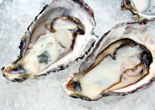 Raw Oysters Over Ice stock image