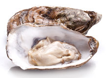 Raw oysters. Stock Images