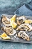 Raw oysters on the plate. Raw oysters with lemon wedges on the plate Royalty Free Stock Images