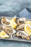 Raw oysters on the plate. Raw oysters with lemon wedges on the plate Royalty Free Stock Image