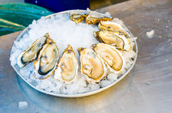 Raw oysters. Plate of oysters in a market of Nice, France Stock Photography