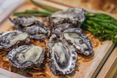 Raw oysters in shell on wooden plate. Raw oysters in shell on a wooden plate Royalty Free Stock Photography