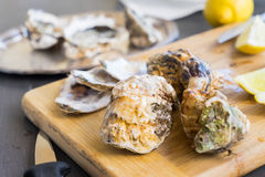 Raw oysters shells Stock Photo