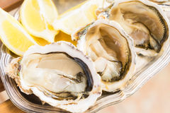 Raw oysters shells Stock Images