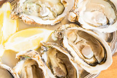 Raw oysters shells Stock Photos