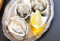 Raw oysters shells Stock Image