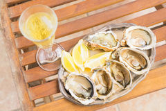 Raw oysters shells Royalty Free Stock Image