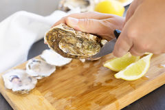 Raw oysters shells. Someone hands opening raw oysters shells, close up view Royalty Free Stock Images
