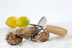 Raw Oysters Royalty Free Stock Photo