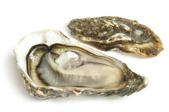Raw oysters Stock Image