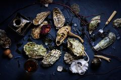 Raw oysters with wine arranged on  dark background. Top view Royalty Free Stock Photo