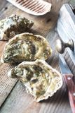 Raw oysters on the wooden background. Close up Stock Images