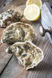Raw oysters on the wooden background. Close up Royalty Free Stock Image