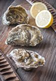 Raw oysters on the wooden background. Close up Stock Photography