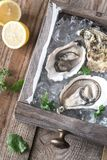 Raw oysters in the wooden box. Close up Stock Photo