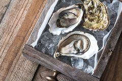 Raw oysters in the wooden box. Top view Stock Image