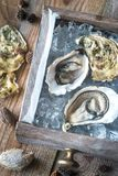 Raw oysters in the wooden box. Top view Royalty Free Stock Photos