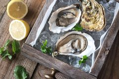 Raw oysters in the wooden box. Top view Royalty Free Stock Images