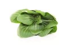 Raw pak choi Royalty Free Stock Photo