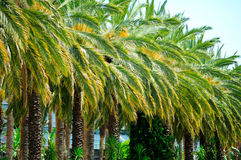 palm green trees Stock Photo