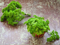 Raw parsley leaves Stock Images
