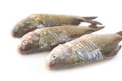 Raw peeled carp Royalty Free Stock Photography