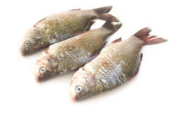 Raw peeled carp Royalty Free Stock Photos