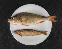 Perch and vendace on the table stock image