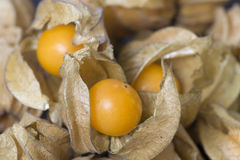 Raw physalis fruit Royalty Free Stock Photo