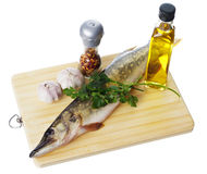Raw pike with cooking ingredients Stock Photography