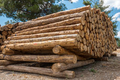 Raw pine wood logs Royalty Free Stock Photography