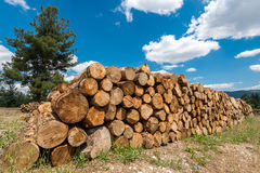 Raw pine wood logs under cloudy sky Royalty Free Stock Photography
