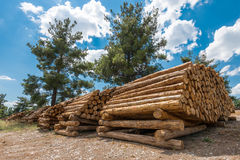 Raw pine wood logs under cloudy sky Stock Image