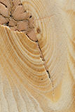 Raw planed wood Stock Photo