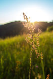 Raw plant in the ray of sunshine Stock Photos