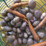 Raw Potato And Carrot Royalty Free Stock Image