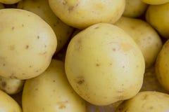 Raw potato. Close up of fresh potato royalty free stock photos