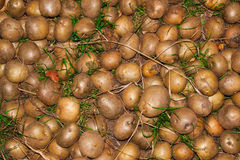 Raw potato close up. Nature background. Agricultural production Stock Photography