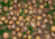 Raw potato close up. Nature background. Agricultural production Stock Image