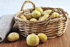 Raw potatoes Stock Photos