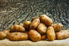 Raw potatoes amid the countryside Royalty Free Stock Photo