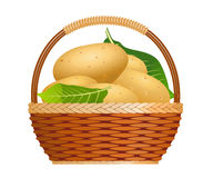 Raw potatoes in a basket Royalty Free Stock Image