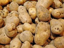 Raw potatoes with blur in background Stock Photos