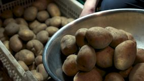 Raw potatoes close up. Vegetable in a basin stock video