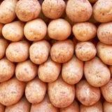 Raw potatoes closeup Stock Image