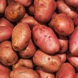 Raw potatoes,  food background. Fresh potatoes Raw Organic red Stock Images