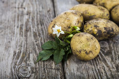 Raw potatoes with leaves Stock Images
