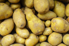 Raw potatoes at the market Stock Photography