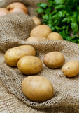 Raw potatoes. On the old rag bag with onion and parsley in background Royalty Free Stock Image